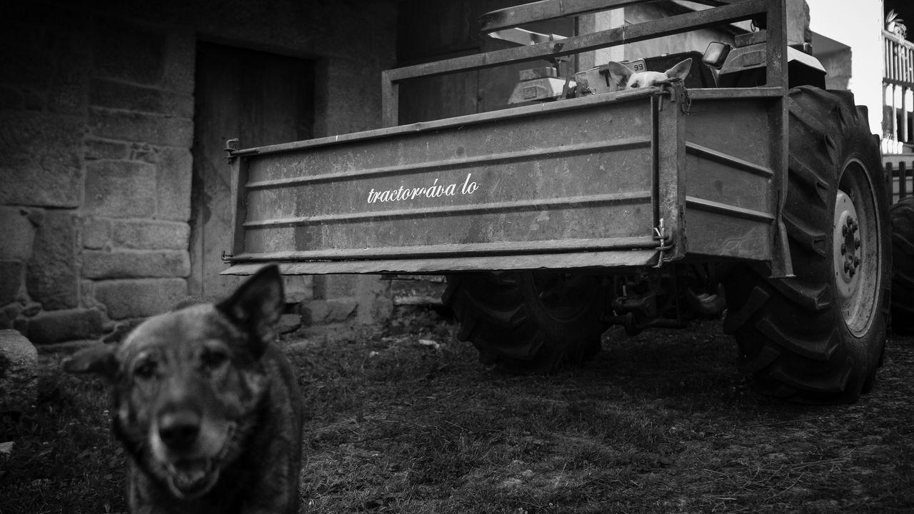 En Tourém, los perros de los vecinos campan a sus anchas por la localidad