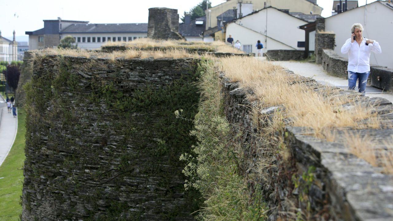 Los aceites de tomillo y orégano servirán para limpiar la Muralla