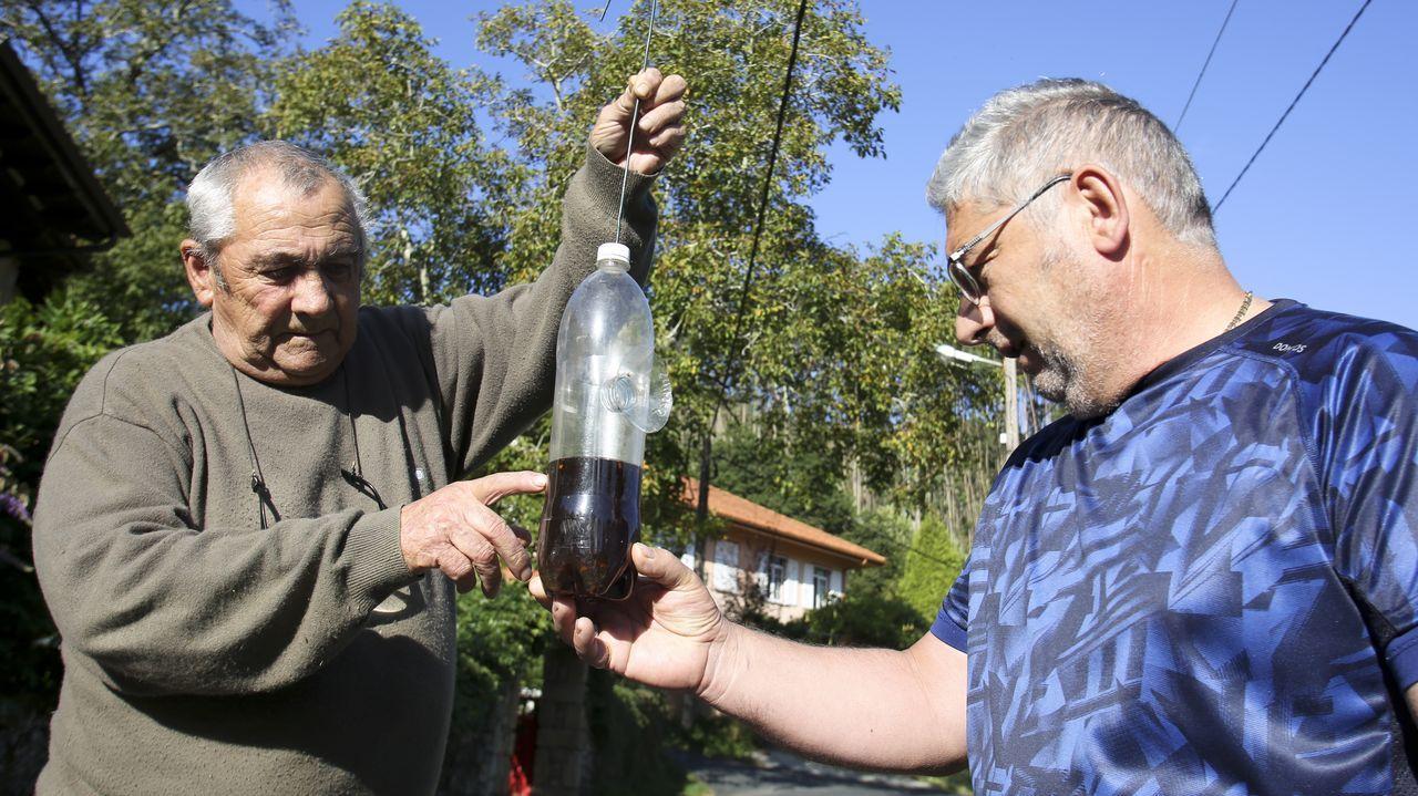 Los vecinos de A Cabana han colgado botellas con un brebaje a base de sidra para atraer a las avispas de tres nidos localizados en la carretera de San Antonio