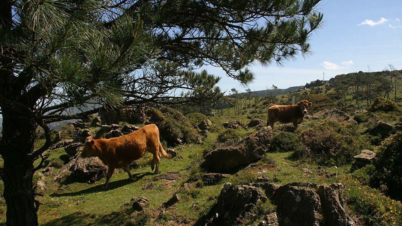 «La eficiencia de estos eólicos es superior a la de anteriores generaciones».Ganaderos y personal de Enel conversan junto al ganado que pasta entre los aerogeneradores del Parque de San Andrés.