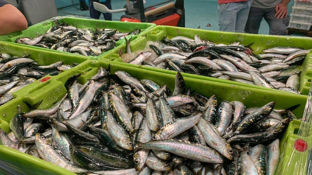 El vídeo de la monumental descarga de bocarte en Burela.Basilio Otero, presidente da Federación Nacional de Cofradías de Pescadores de España, nunha imaxe de arquivo