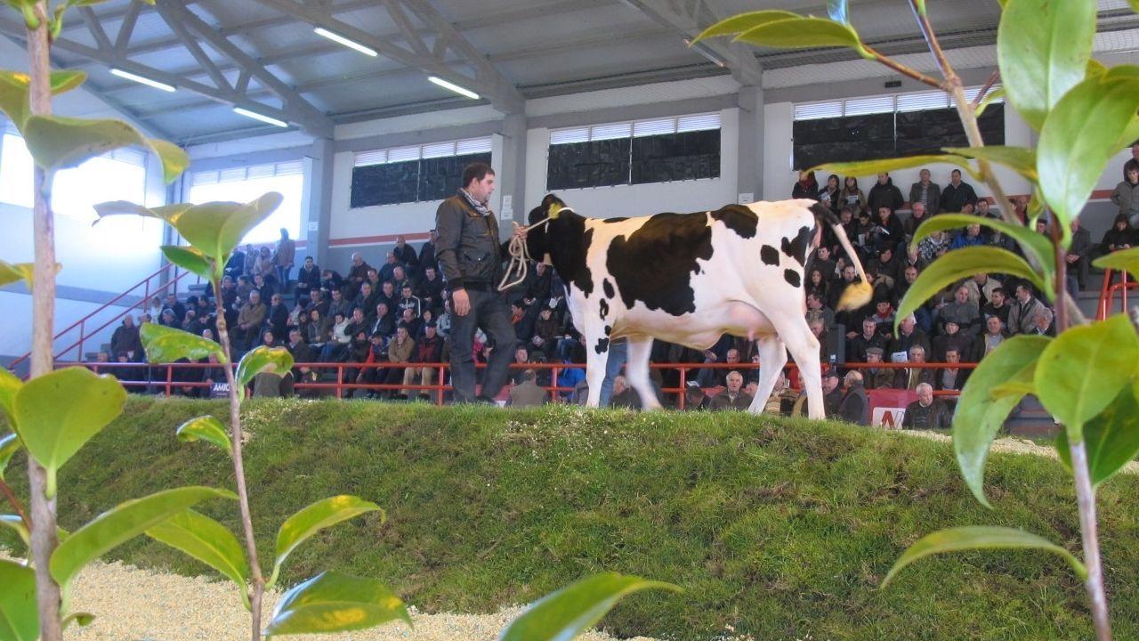 Imagen de una subasta celebrada en Mazaricos