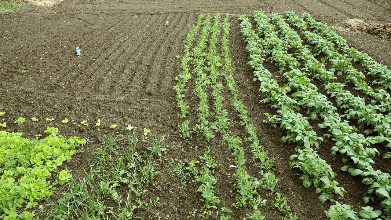 O rural, parte de ti: Na Abada.Planas con sus homólogas de Alemania (izquierda) e Italia (derecha)