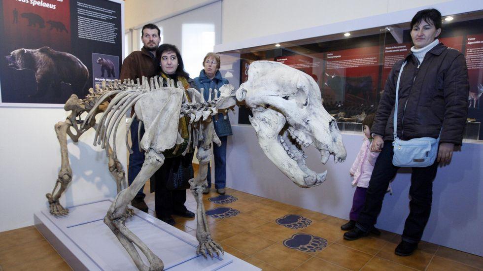 Un recorrido visual por la Ruta do Ferro de O Incio.Visitantes ante la réplica de un esqueleto de oso de las cavernas en el museo geológico de Quiroga, uno de los lugares donde se desarrollarán las actividades del programa Observer