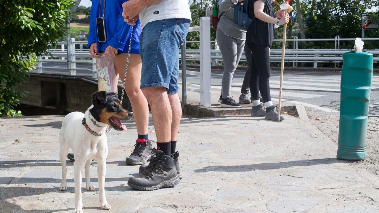 Amasarte.Un perro junto a varios peregrinos, en Portomarín