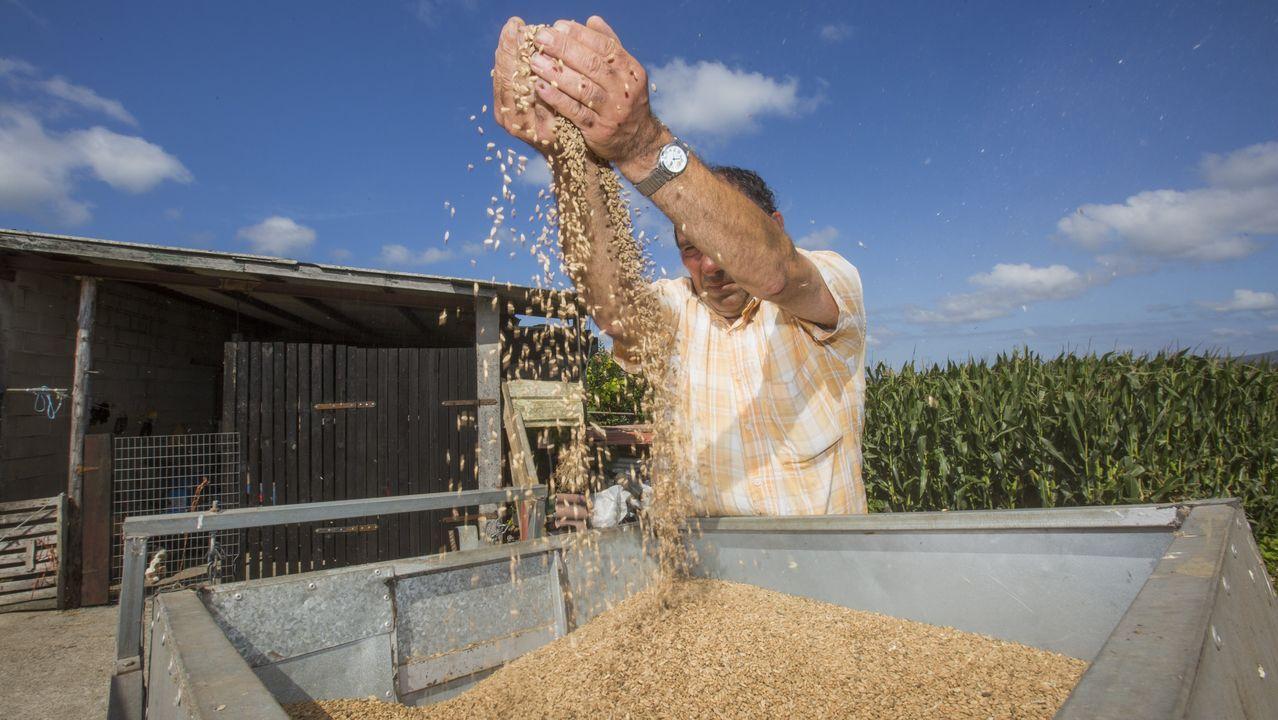 Separando la paja del trigo: vídeo.Juan Ramón Sanjurjo será el presidente de la asociación que está dando los últimos pasos legales para su formalización