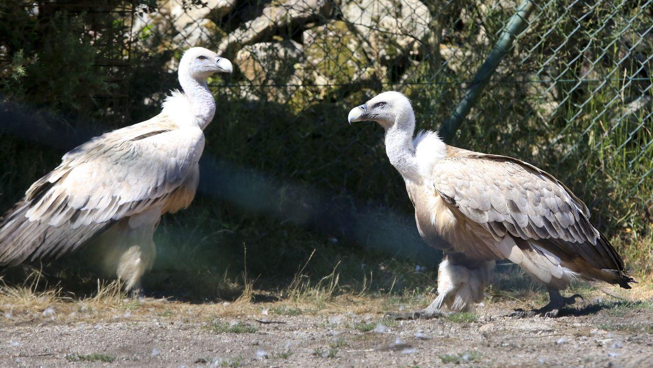 En Avifauna se pueden ver aves de unas 150 especies originarias de todo el mundo. Los buitres son originarios de La Rioja