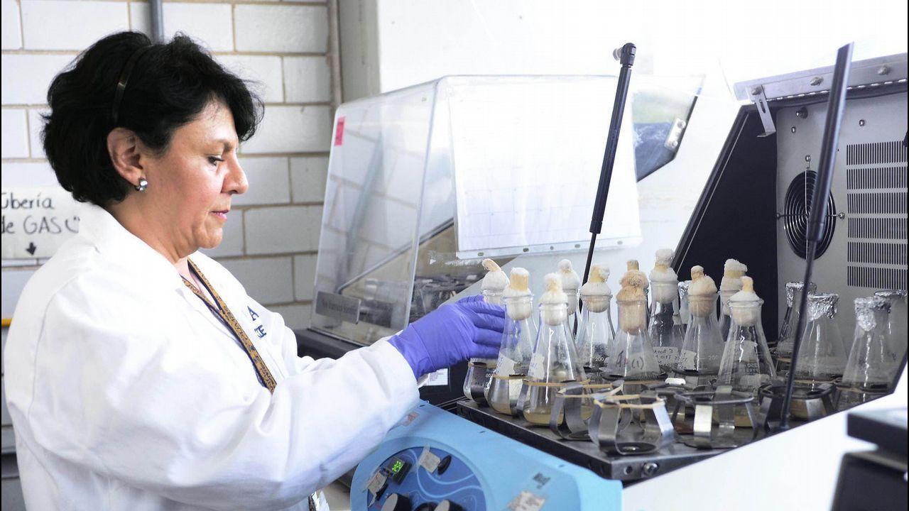 Una especialista analiza muestras contaminadas por listeria