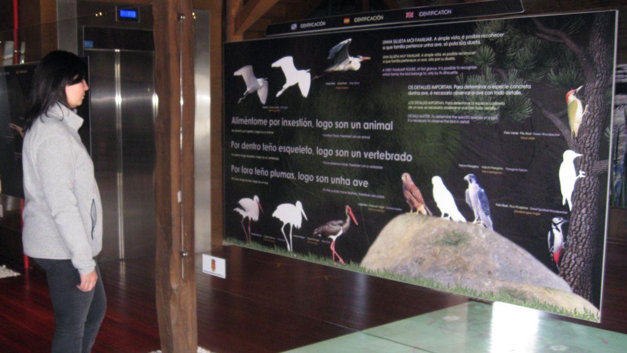 Una visita a las minas romanas de Ribas de Sil fue una de las actividades que no se cayeron del programa pese al mal tiempo