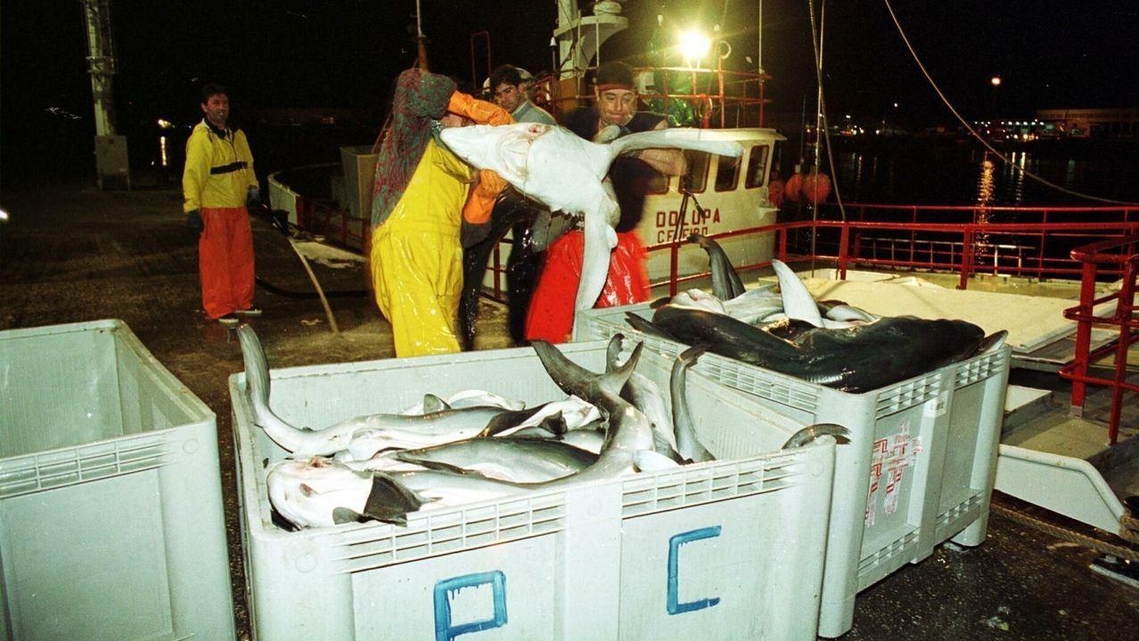 Orcas el pasado viernes en Fisterra.Nuevo alumbrado público instalado por el Ayuntamiento en la calle Morín