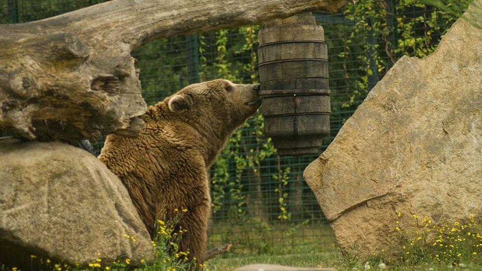 Gerardo Iglesias.Un oso en una colmena