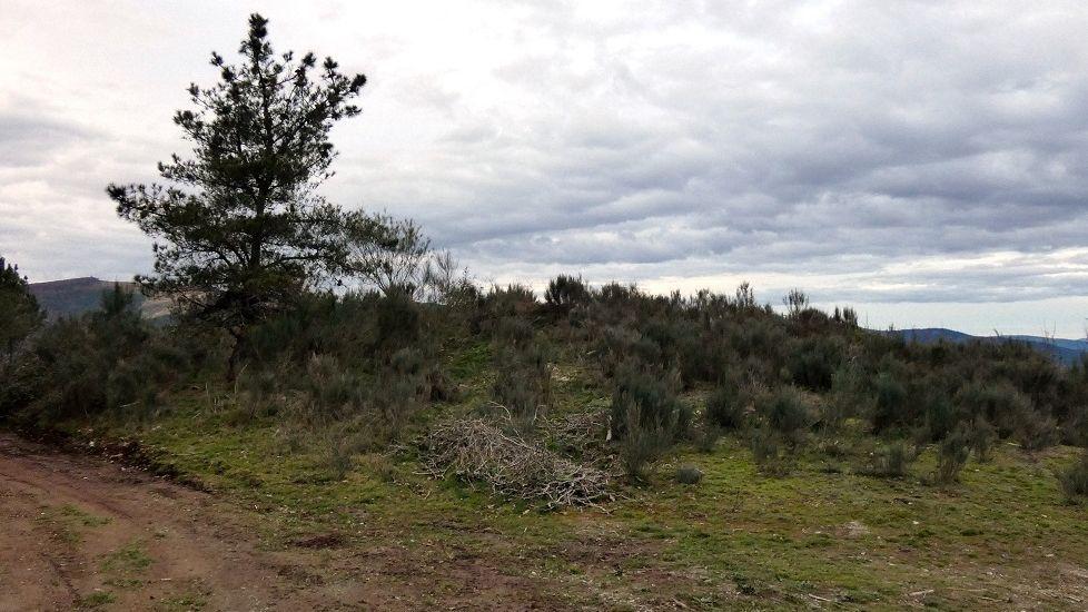 Mámoa en Ferreiros de Valboa, en Becerreá