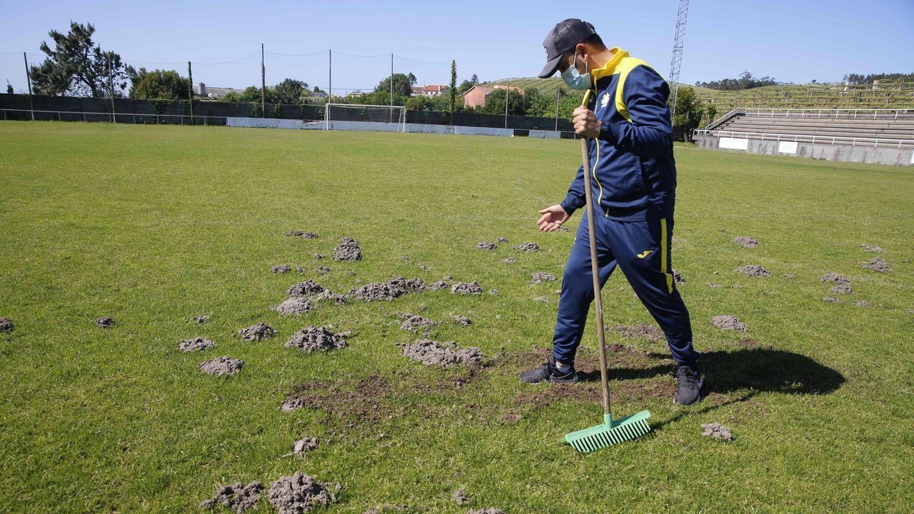 Los topos se comen el césped del campo de fútbol de Burgáns en Cambados