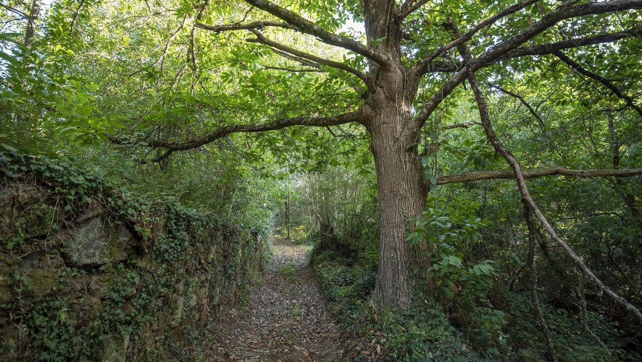 Un tramo del camino a su paso por el lugar de A Eigrexa