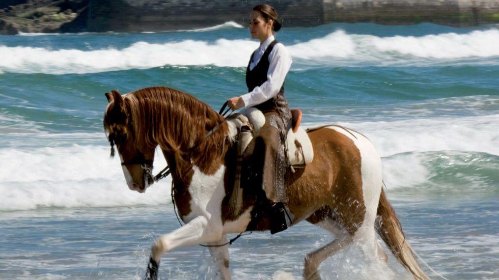 Un jabalí en las calles de Oviedo.Imagen promocional de las carreras de caballos de Ribadesella