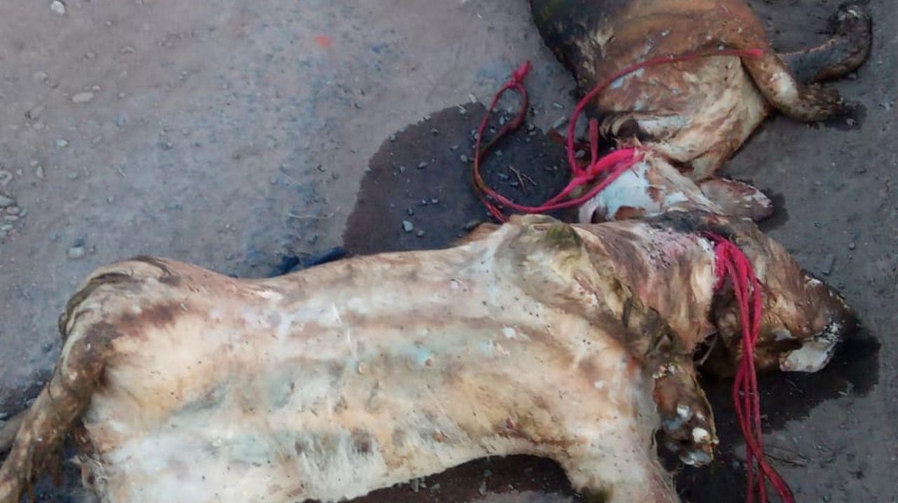 Crimen machista en Valga.El cuerpo fue localizado por un voluntario en un canal de la Vega Baja valenciana