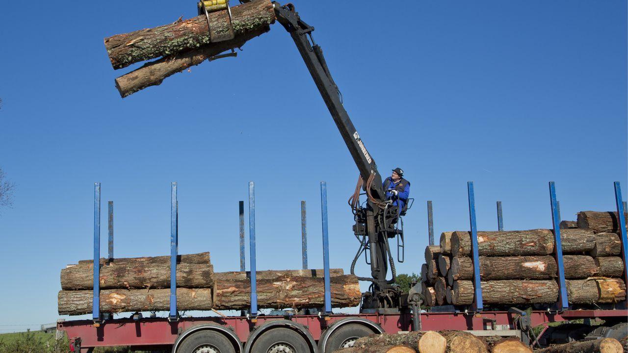 La empresa de Baldomero Fernández tramita unas 1.500 toneladas de madera cada mes