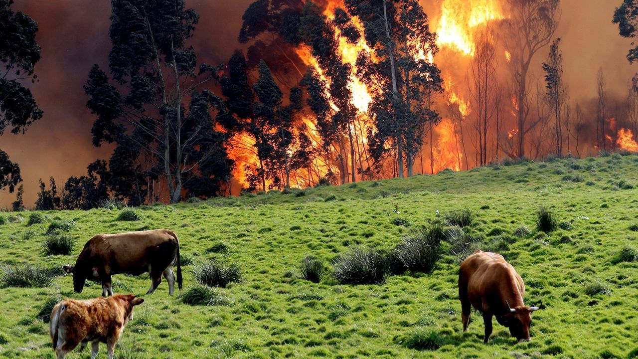 La crudeza del fuego asturiano en imágenes.La plaza de la catedral de Oviedo