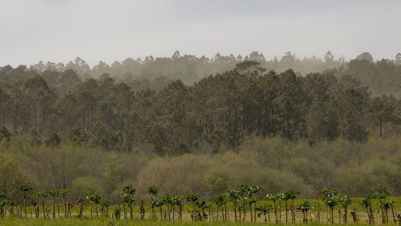 Concentración de polen al levantarse las nubes