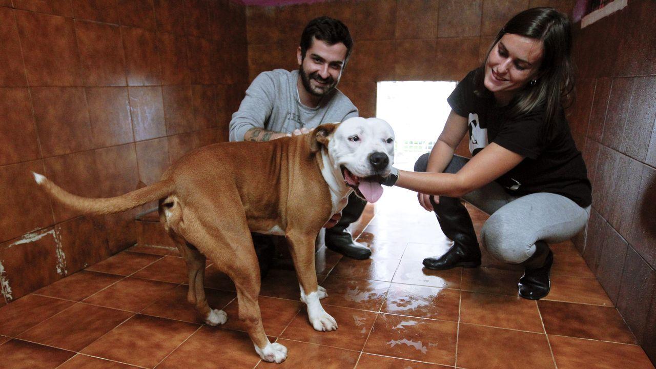 Dueños irresponsables para perros no tan malos