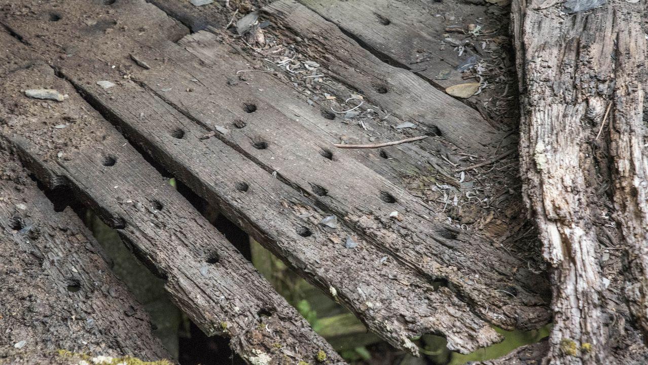 Tablas de un canizo, la plataforma donde se ponen a secar las castañas, en uno de los sequeiros abandonados