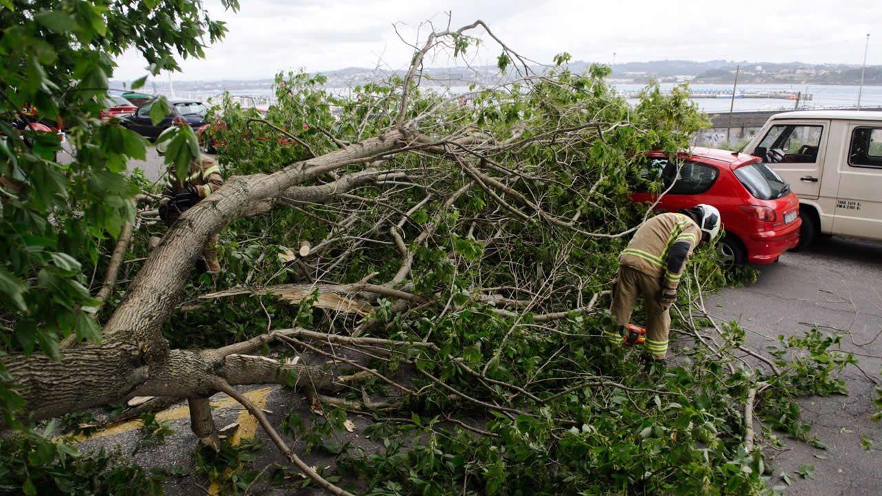 Cae un árbol en la avenida de Oza.NOEL Y DAVID BISBAL