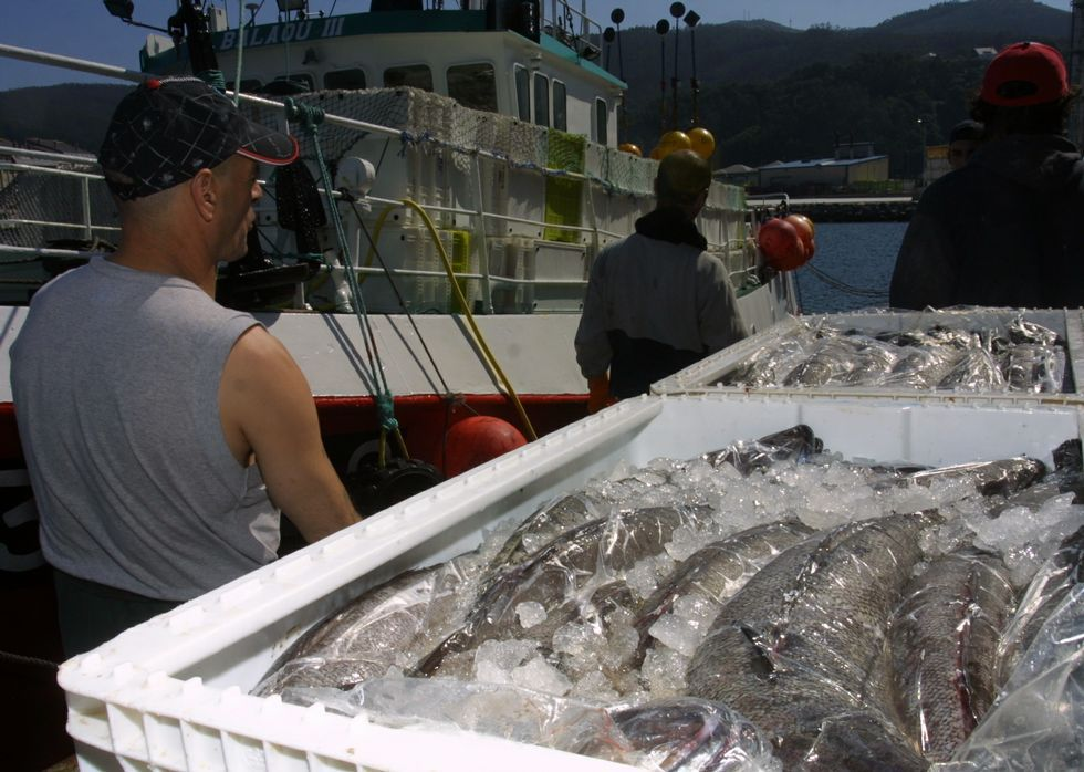 Celeiro y Burela subastaron durante el año recién acabado 22 millones de kilos de merluza fresca.