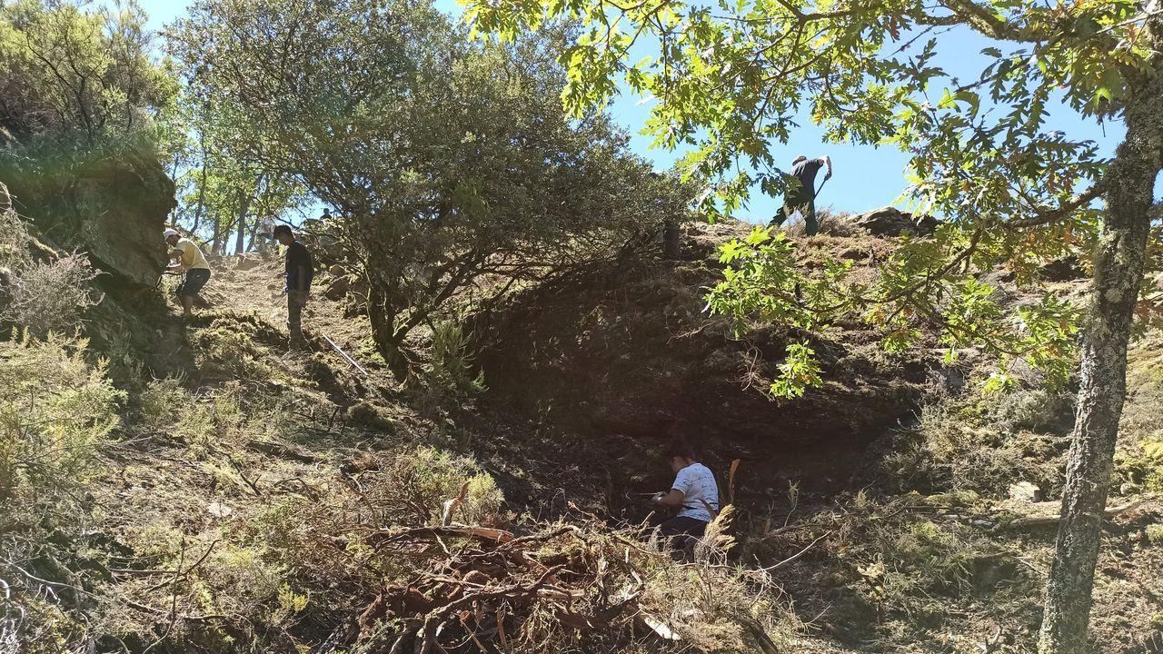 Ruinas del monasterio de San Clodio de Ribas de Sil.Trabajos de desbroce realizados el año pasado en el castro de Penadominga