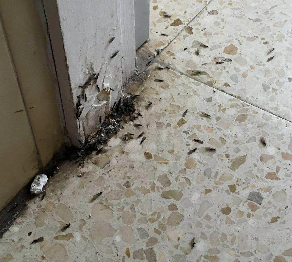 El Málaga-Deportivo, en fotos.Las termitas en el colegio.