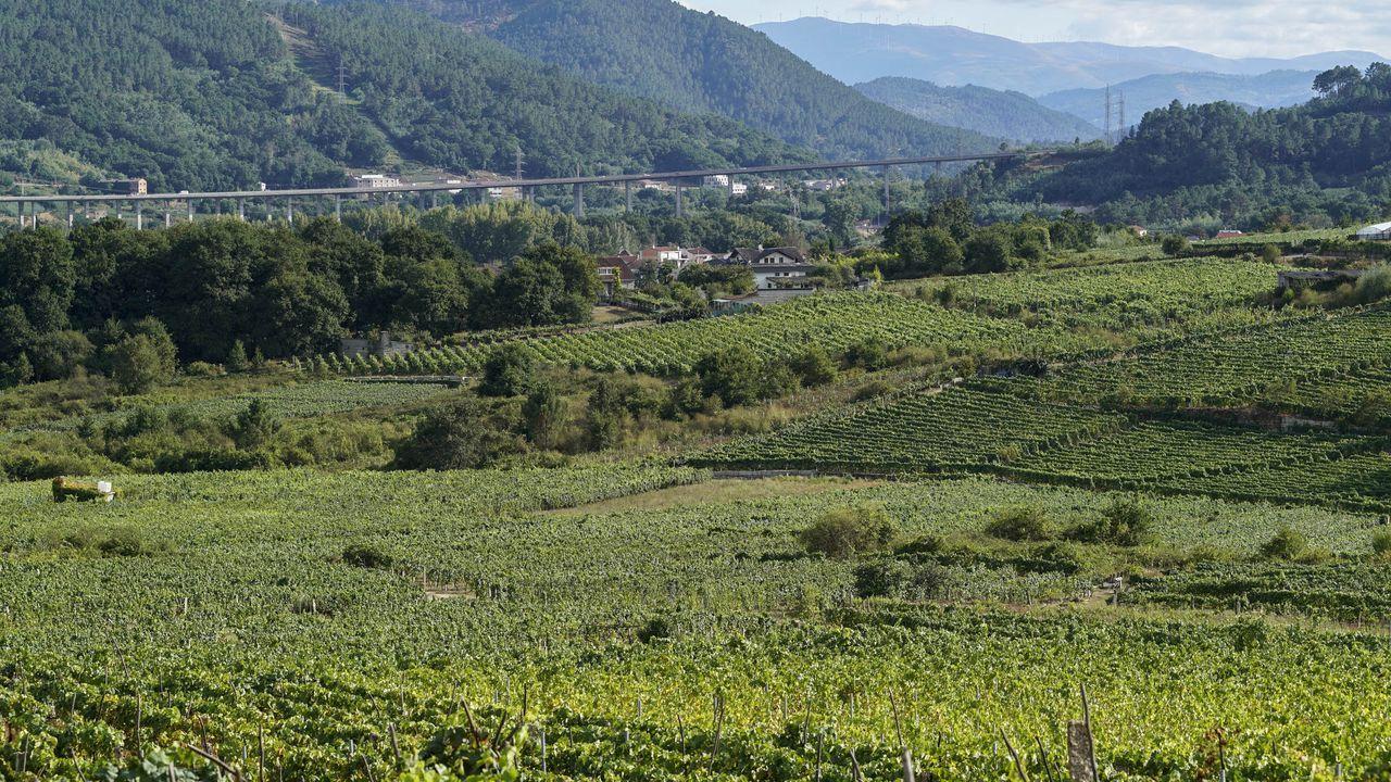 Imagen de archivo de la vendimia en Valdeorras