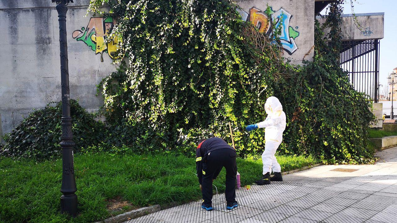 Una abeja se escapa de la trampa selectiva para velutinas.Operarios de Bomberos de Oviedo retiran un nido de avispa asiática o velutina en el barrio de Otero