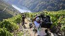 Jornaleros en la vendimia de una de las viñas de Adega Guímaro