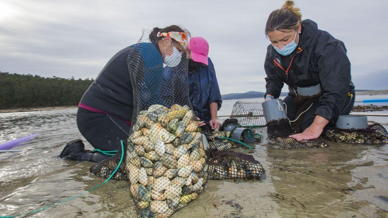 Mariscadoras trabajando en Camariñas, en una foto de archivo