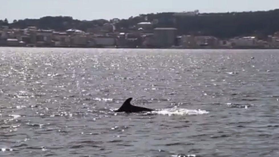«Tenía una aleta negra, medía dos metros y se movía como un tiburón»