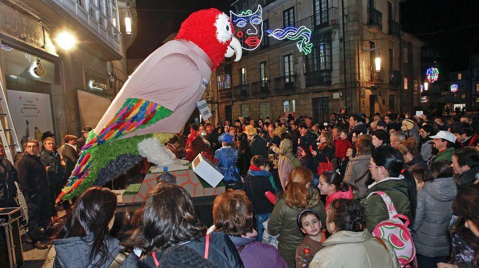 El loro Ravachol de Pontevedra
