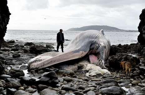 El cetáceo y la zona de Redonda recibieron numerosas visitas a lo largo de los últimos días.