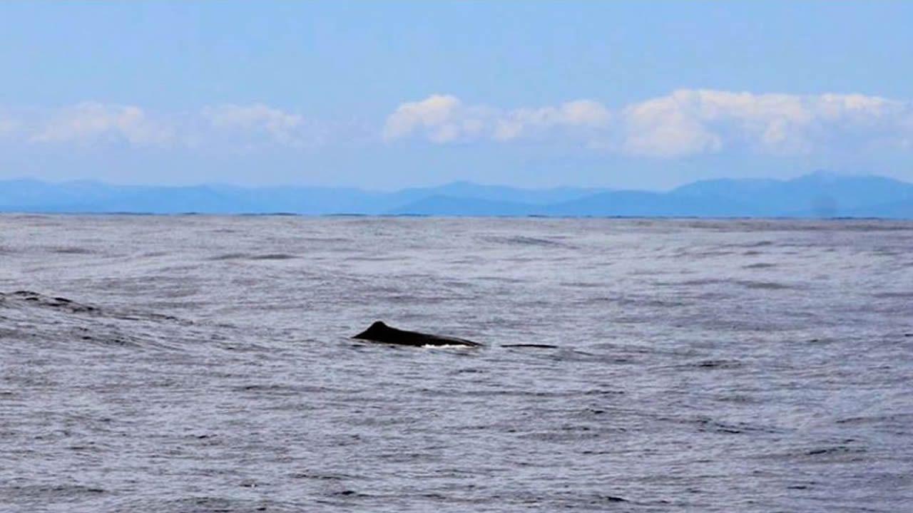 Fernando Fra Rico fotografió los cachalotes que avistó frente a A Mariña lucense e informó al Cemma